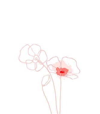 Visuel fleurs - Anne-Flore Baron